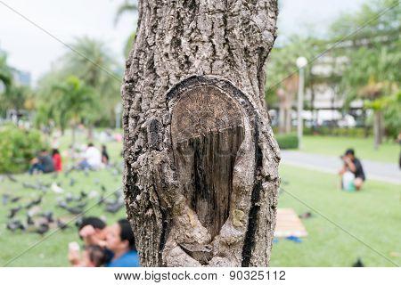 Log wood