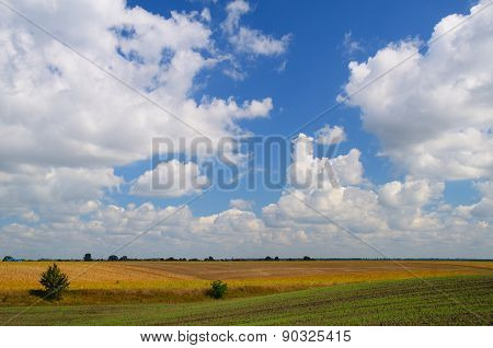 Farming Fields During Day