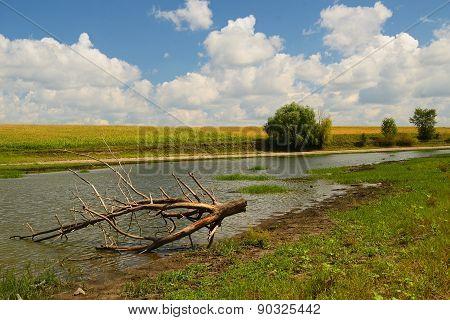 Rural Summer River Landscape