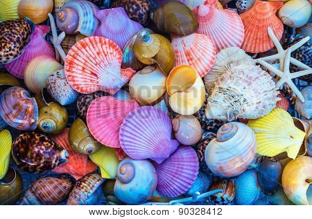 Closeup: colorful sea shells in different shapes