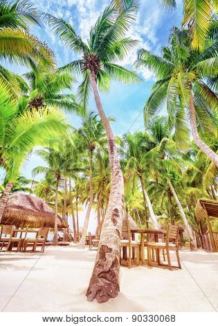 Summer time cafe on beautiful tropical beach, fresh big green palm trees, luxury beach resort in Mexico, North America
