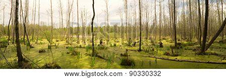 Bog In Wood