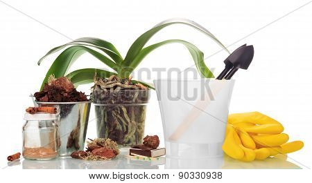Garden tools and  orchid plants