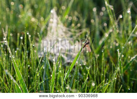 insect in dew drops on the grass