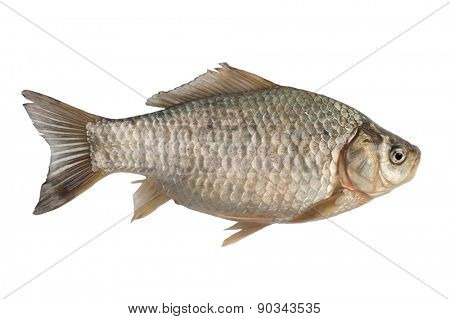 Freshly freshwater fish Crucian carp (Carassius auratus gibelio) isolated on white