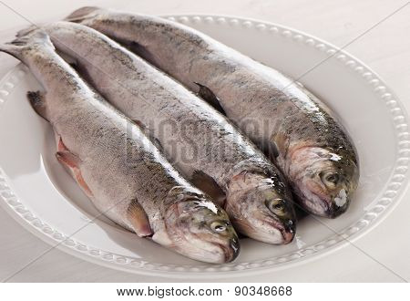 Rainbow Trouts On A White Plate.