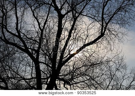 naked tree on sky background at day
