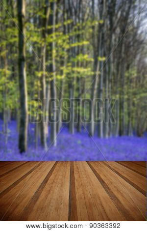 Beautiful Morning In Spring Bluebell Forest With Sun Beams Through Trees With Wooden Planks Floor