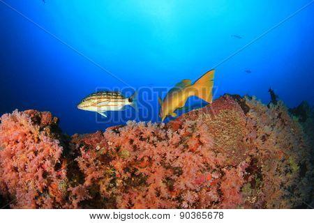 Coral reef sea ocean underwater