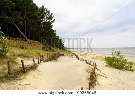 Summer Dunes On The Coast Of The Baltic Sea