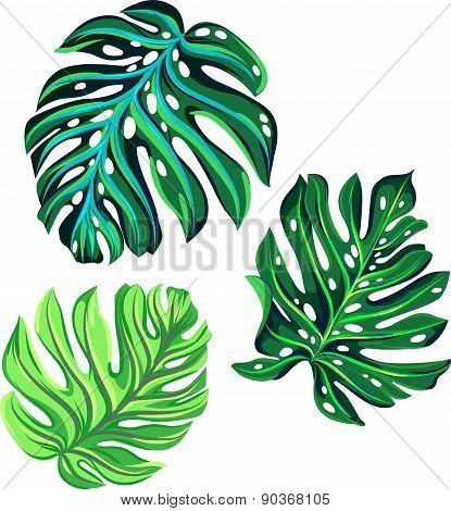 vector set of monstera leaves