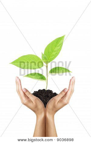 green plant in woman hands isolated on white