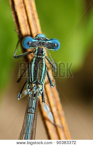 Bright Dragonfly On A Branch