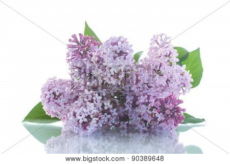 Beautiful Flowers Blooming Lilac