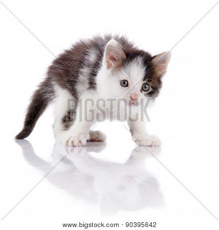 The Surprised Spotty Kitten.