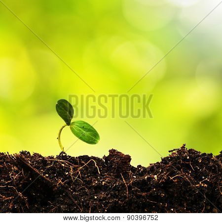 Green Sprout Growing From Ground