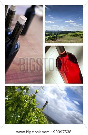 Wine And Vineyards