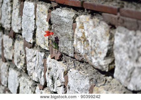 Stone Walls Went Through The Flowers