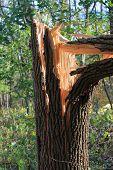 foto of hurricane wind  - Broken Tree  - JPG