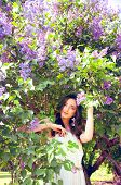 image of lilac bush  - Woman with long brown hair in lilac bushes on a sunny day - JPG