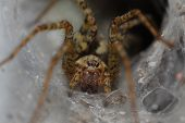 picture of extreme close-up  - Spider in his house - JPG