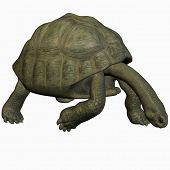 Galapagos Tortoise-Look Down poster