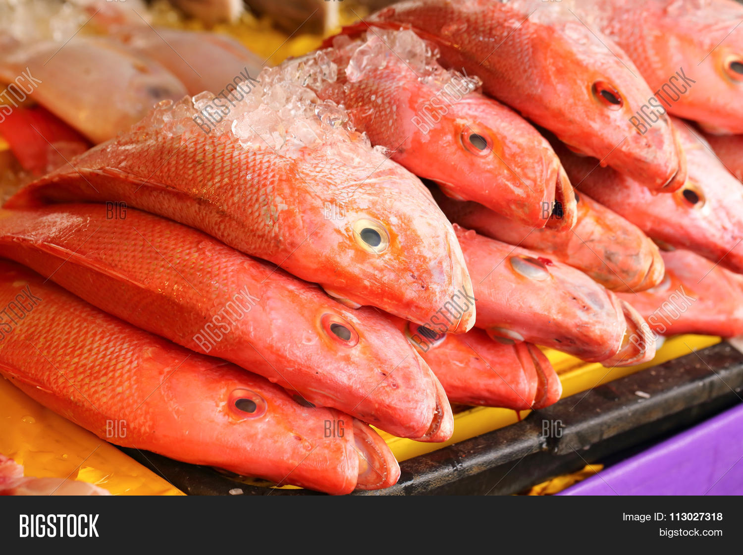 Red snapper fish image photo bigstock for Red snapper fish