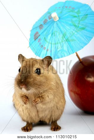 Brown Female Rodent On Summer Holiday With Umbrella