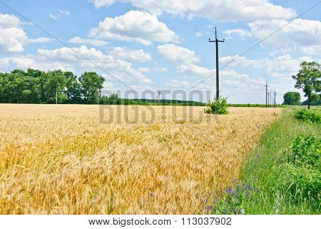 Wheat Field And Blue Sky With Clouds.ukraine