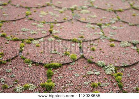Bunches of colorful moss on the tiled roof