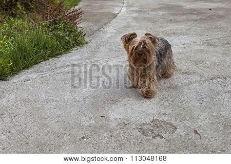 Fluffy Dog In The Backyard