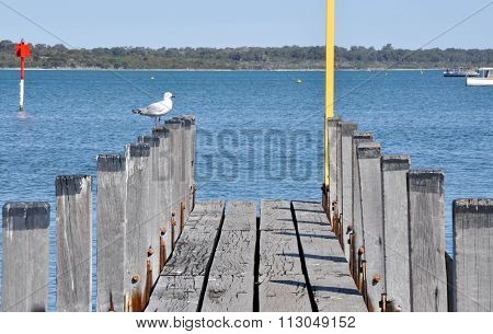 Wooden Pier with Silver Gull