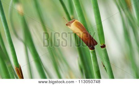 Bamboo Grass Impression