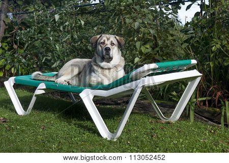 A Mastiff Hammock