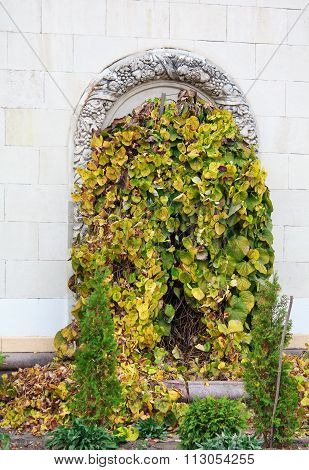 Overgrown With Ivy Door Arch In Classical Style