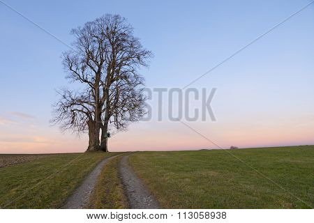 Lonely Tree With Wayside Cross And Rural Field Track At Sunset