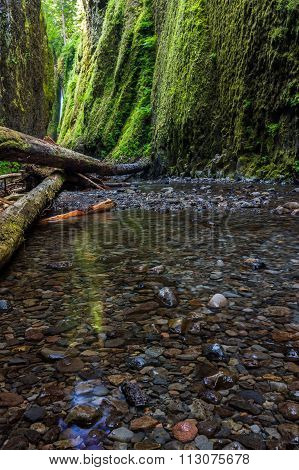 Beautiful Nature In Oneonta Gorge Trail, Oregon.