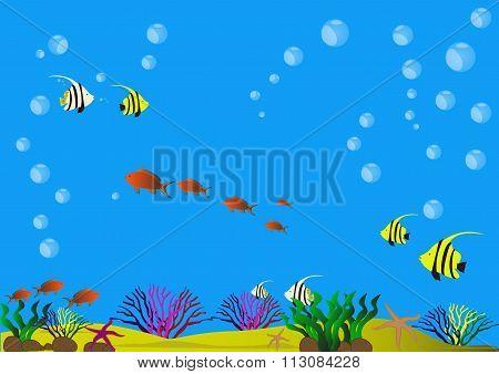 Beautiful sea bottom with shells algae fish and sandy bottom