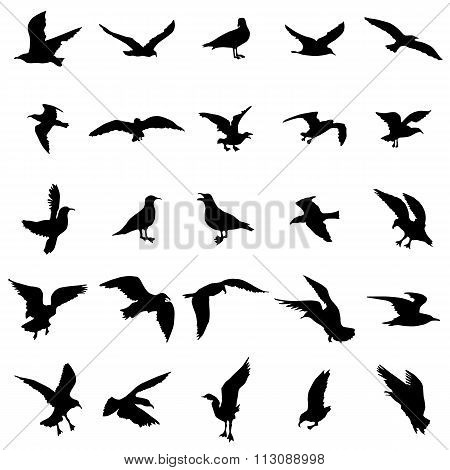 Gull silhouettes set. Gull silhouettes vector. Gull silhouettes art. Gull silhouettes web. Gull silhouettes shape. Gull icons. Gull icons art. Gull icons web. Gull icons shape. Gull icons illustration