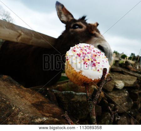 donkey tempted by cake on a stick