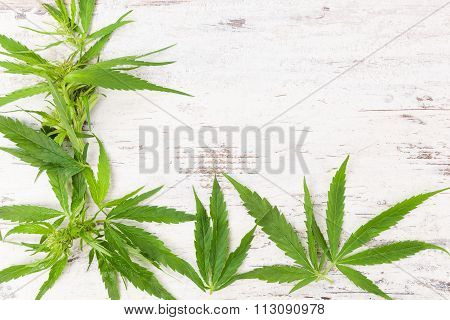 Cannabis With Copy Space.