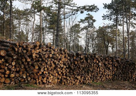 Shot Of Freshly Cut Firewood Logs In A Stack