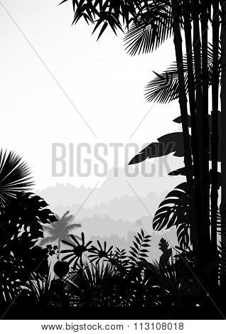 Forest landscape of tropical background