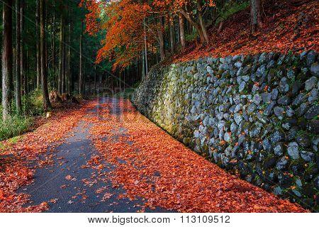 The Road to Taiyuinbyo Shrine and Futarasan-jinja Shrine in Nikko, Tochigi Japan