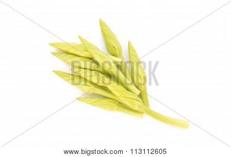 Ipomoea Alba Flower