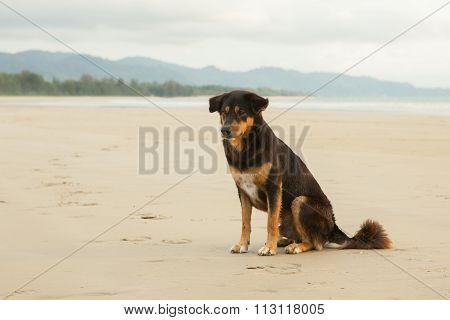 Stray Dogs On Beach