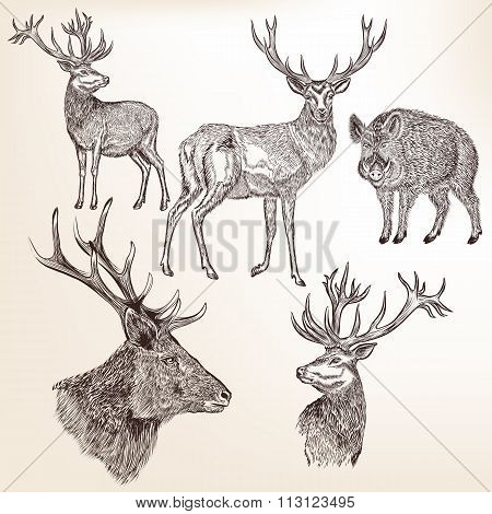 Set Of Detailed Hand Drawn Animals