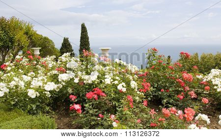 Rose Garden With Vases On Sea Coast