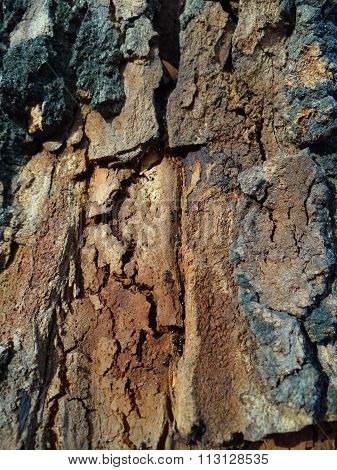 the bark of the tree