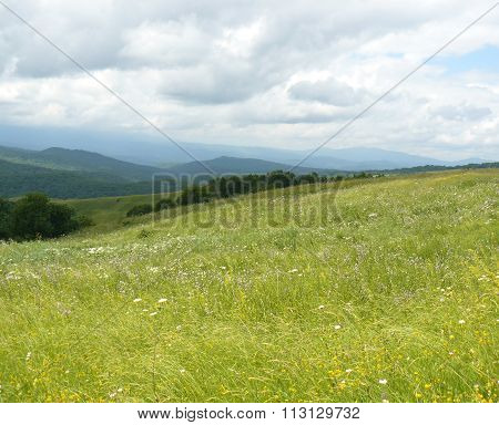 The Blossoming Meadows On Slopes Of Hills.